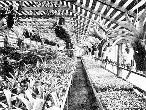 Flowers And Fruits For Central Florida (Holmes Nurseries, Jack.O. Holmes, Inc., Tampa 1, Florida) Jack O. Holmes